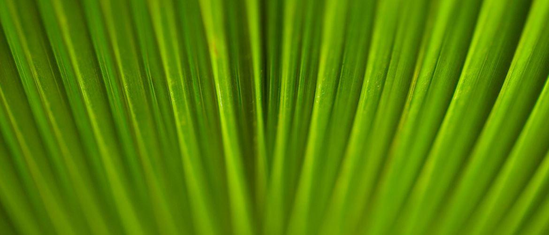Detail exotické zelené rostliny