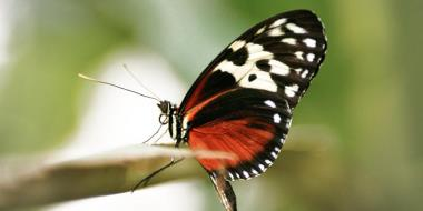 Motýľ sediaci na konári