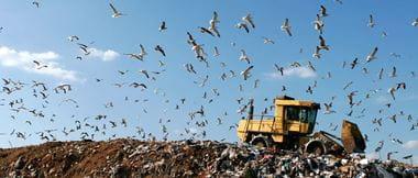 Bagger verteilt Müll auf einer Deponie, Möwen umkreisen die Szene.