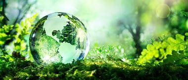 Glaserdkugel auf grüner Wiese