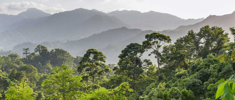 Regenwald mit Berglandschaft im Hintergrund