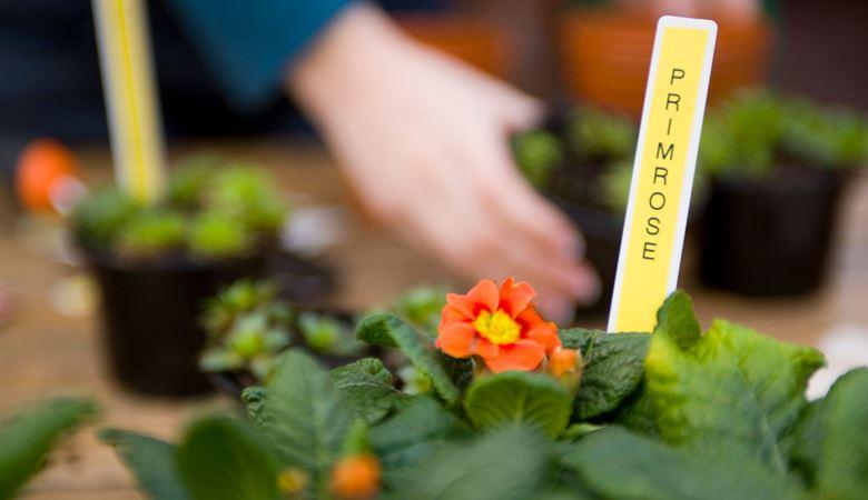 Macetas de flores con etiquetas amarillas