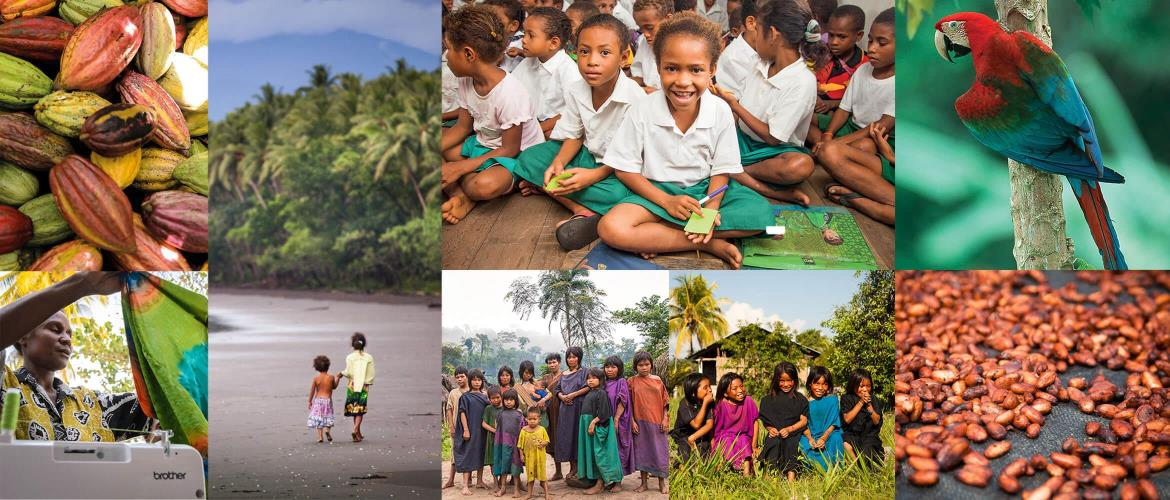 Cool Earth charity photo collage