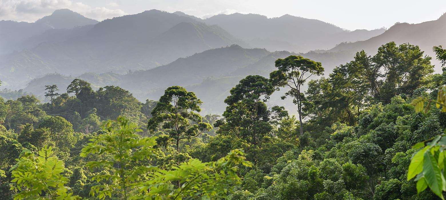 Deštný prales s horskou mlhou a zelenými stromy