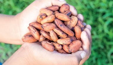 Kávová zrna v ruce - dobré životní prostředí země