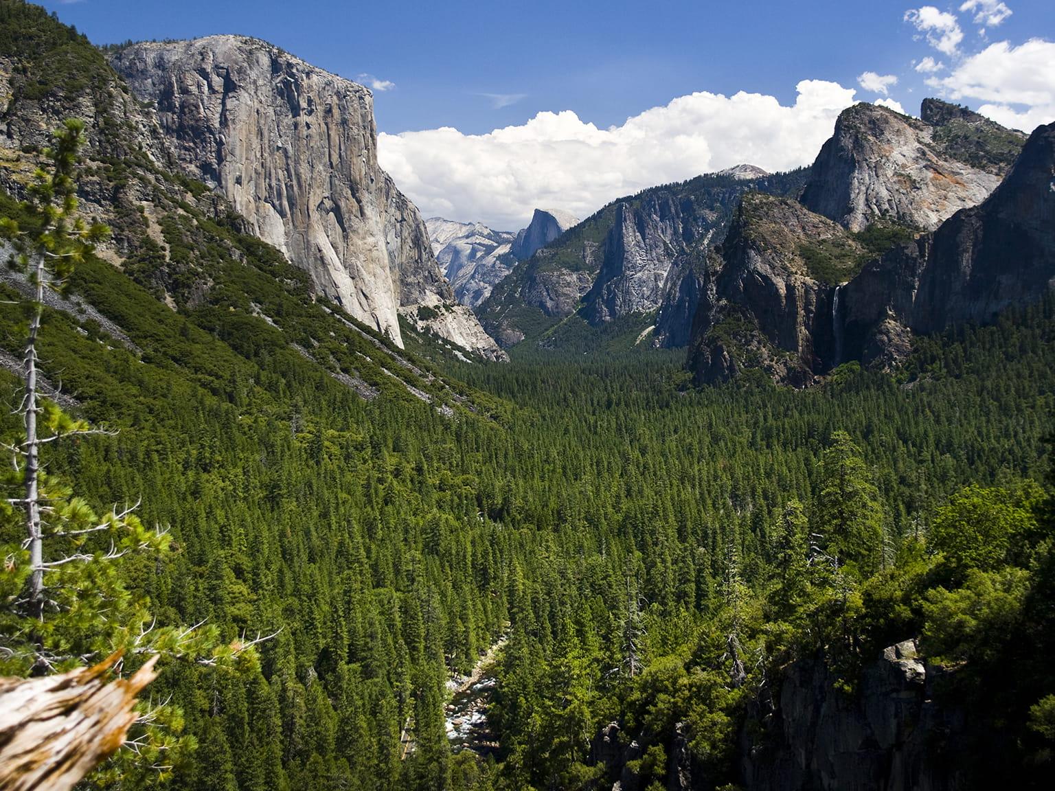 Obloha údolí horského lesa