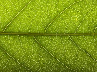 Green Leaf Detail Environmental