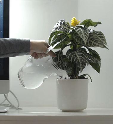 osoba sjedi pokraj zaslona i zalijeva biljku