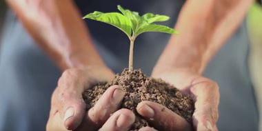Човек държи в шепи пръст с растение в нея.