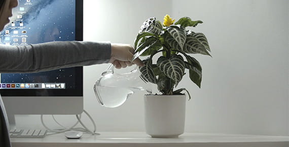 person sat near monitor watering plant