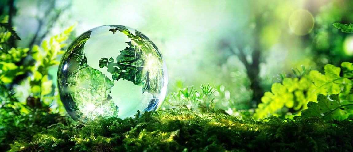 Une sphère en verre représentant la planète Terre repose sur un lit vert de mousse et de feuilles. Les rayons du soleil traversent le globe et illuminent les alentours.