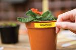 Jardinez plus facilement avec l'étiqueteuse PT-H100