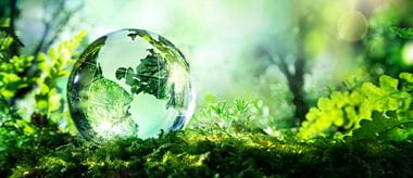 A glass sphere representing planet Earth sits on a green bed of moss and leaves as the sun shines through the globe and illuminates the environment