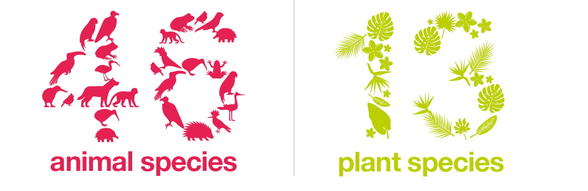 Environmental graphic to state that 46 animal species and 13 plant species were protected via Brother Earth