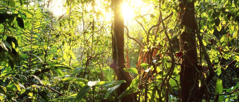 Auringonsäteet valaisevat sademetsää