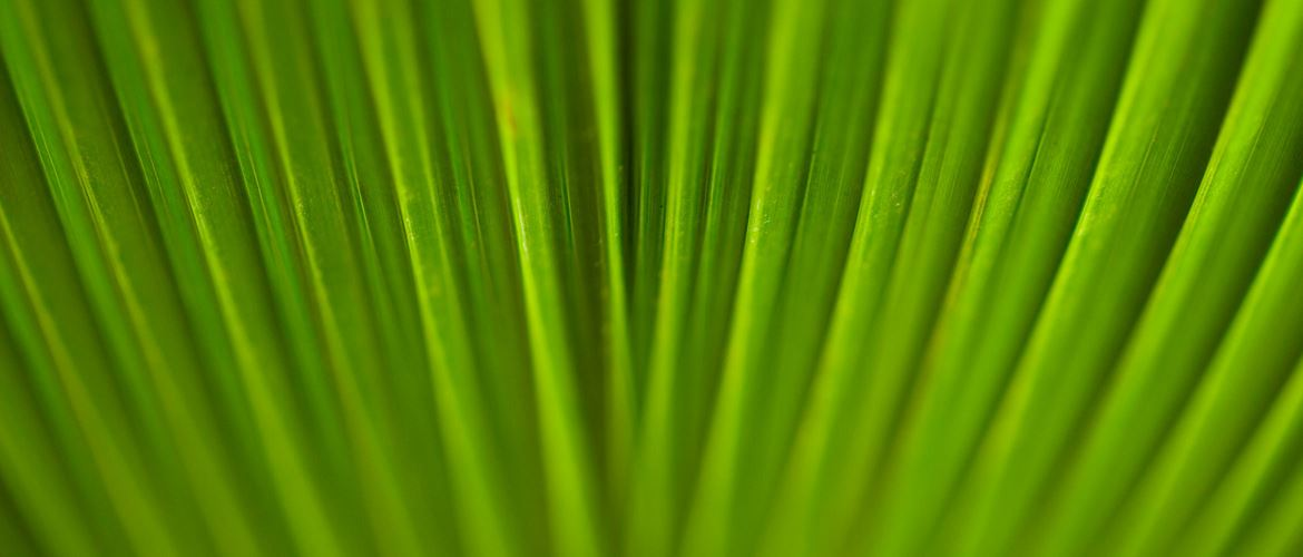 Close up of green leaves from plant