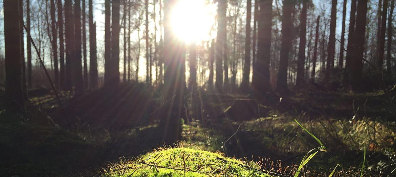 Solen skinner mellom trærne i en regnskog