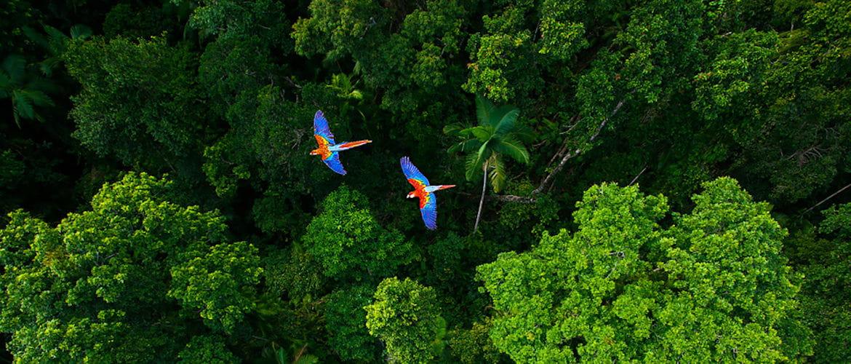 Como proteger a selva reciclando consumíveis com Brother