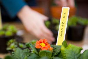 Etiquetas Brother para jardines e viveiros