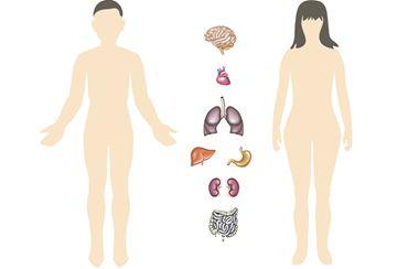 human-body-puzzle-1-en-2