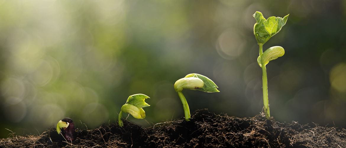 plants growing from seed