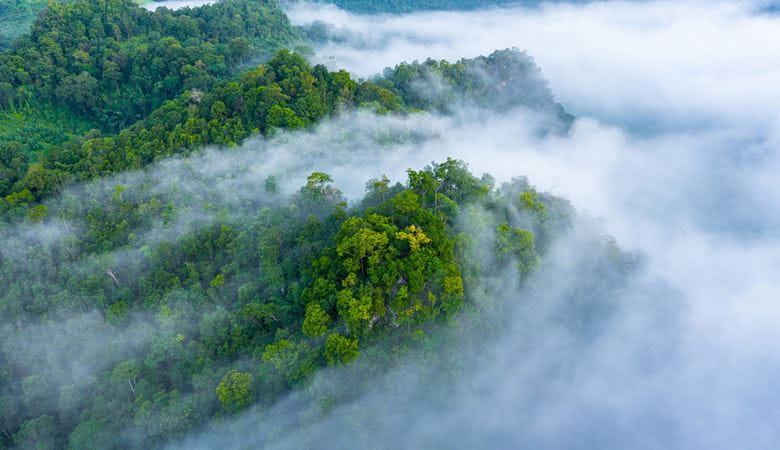 A rainforest covered in clouds