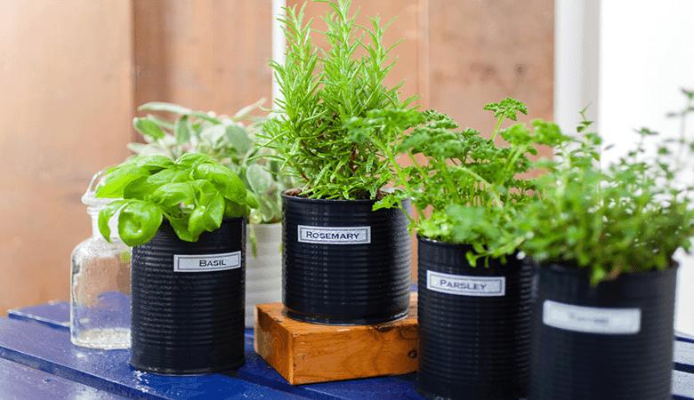 labelled garden plants